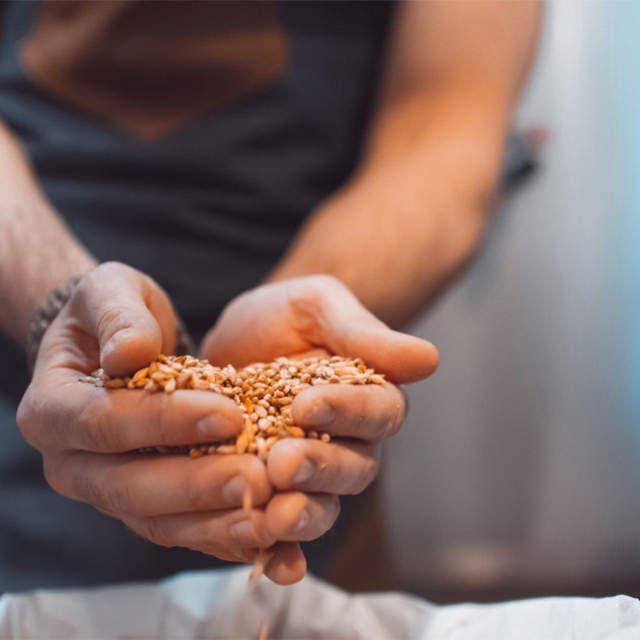 mãos a segurar cereais